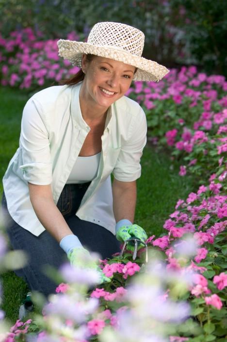 CBR003130 mature market gardening